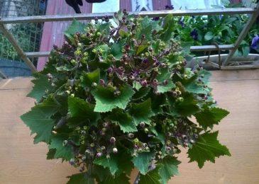 hoa cuc la nho 2