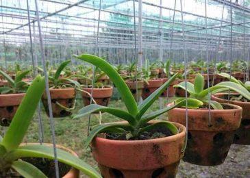 quy trình trồng lan ngọc điểm rừng