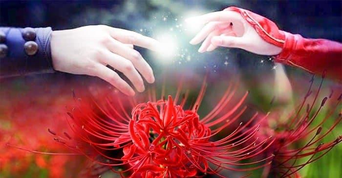 hoa bi ngan dep 22 min