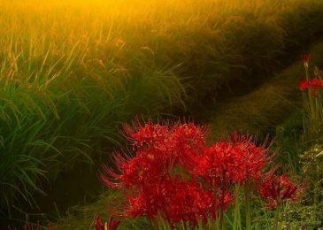 hoa bi ngan dep 3 min