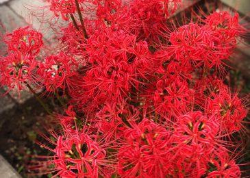 hoa bi ngan dep 5 min