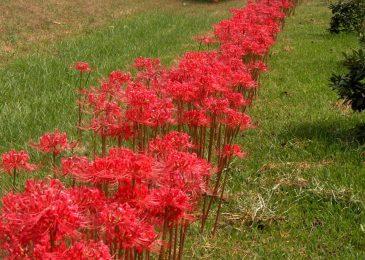 hoa bi ngan dep 7 min