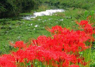 hoa bi ngan dep 8 min