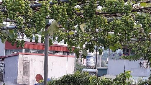 những cây nhỏ phát triển trên sân thượng