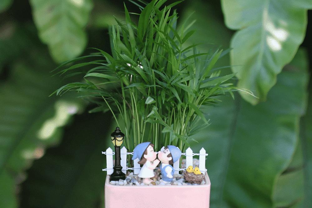 vẻ đẹp của cây cau tiểu trâm