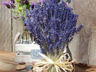 hoa oai huong 1 min