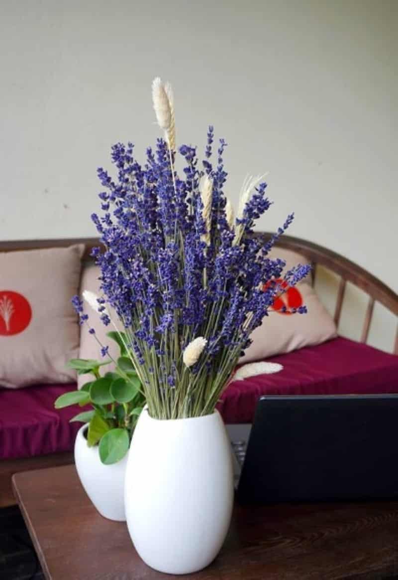 hoa oải hương lavender cắm bình để bàn