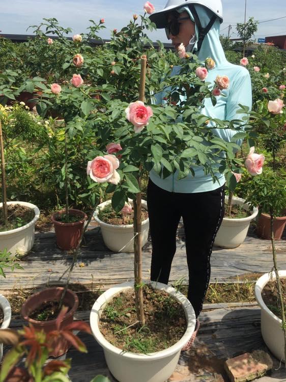 vẻ đẹp của loài hoa hồng Eckart Witzigmann