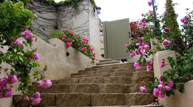 con đường đầy ắp những  Hoa hồng Bishop Castle đẹp ấn tượng