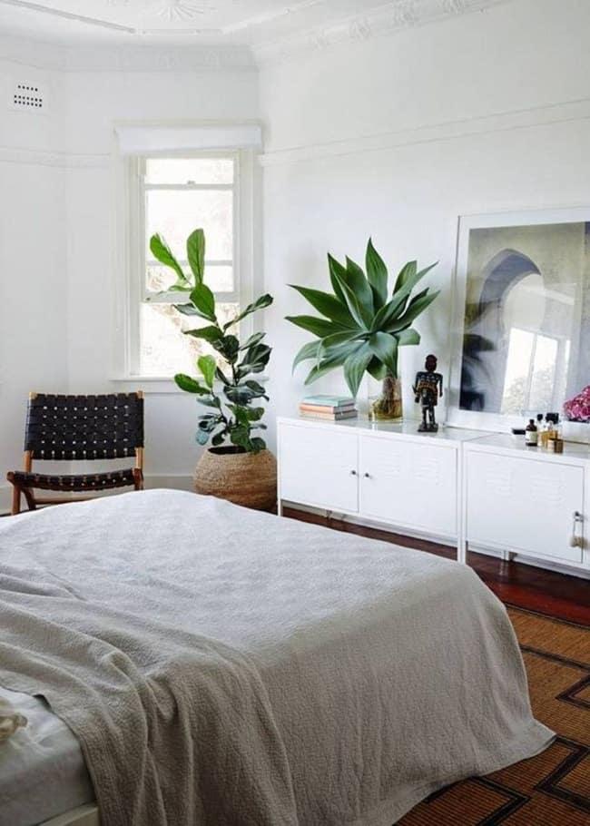 có nên để cây xanh trong phòng ngủ