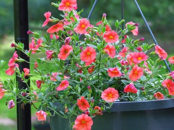 cảm nhận được sự thay đổi lớn của những bông hoa