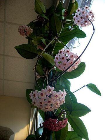 vẻ đẹp của những bông hoa lan cẩm cù