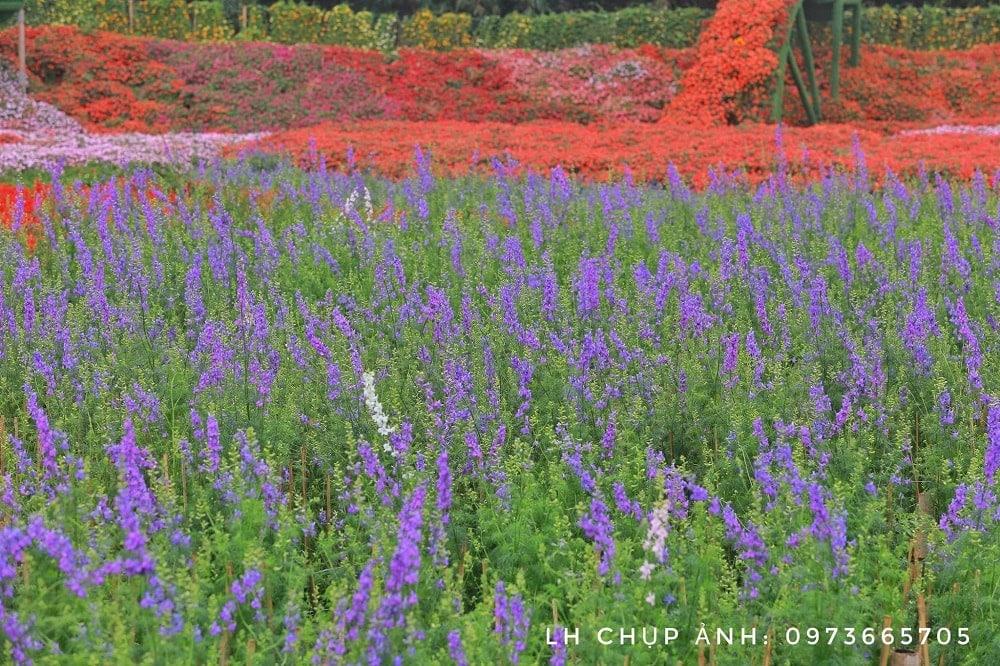thung lũng hoa violet
