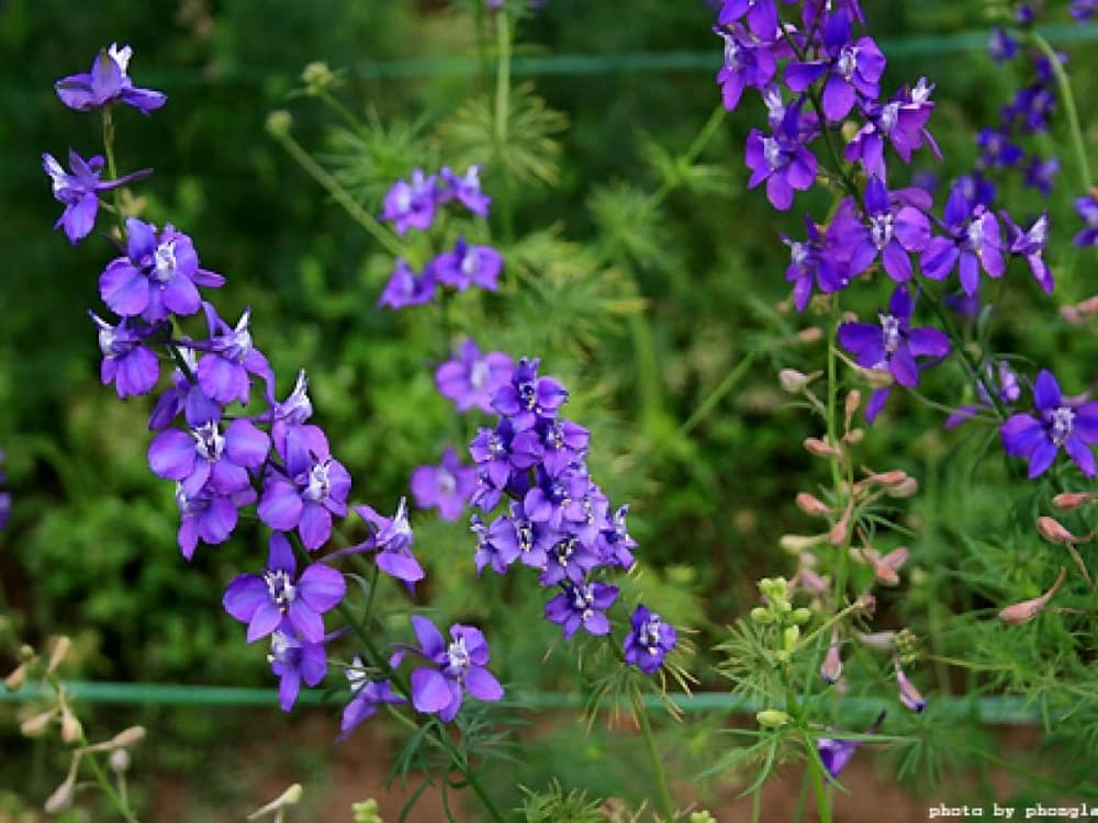 ngắm nhìn những bông hoa violet