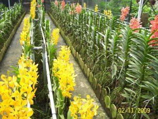 hoa lan cat canh dep 6