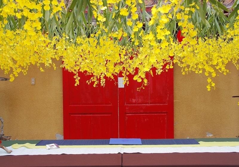 trồng hoa Lan Vũ nữ treo quanh nhà đẹp thanh tao