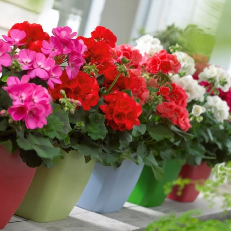 bờ hoa phong lử thảo rộn ràng hương sắc