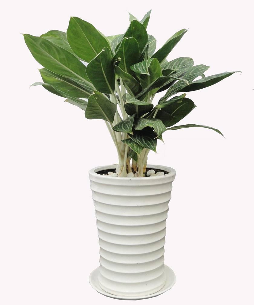 chậu cây phát triển khỏe mạnh