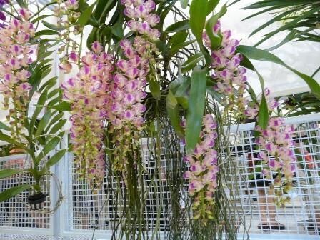 vườn hoa lan giáng hương