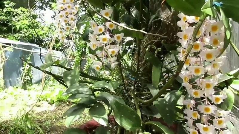 hoa lan thủy tiên ghép gỗ