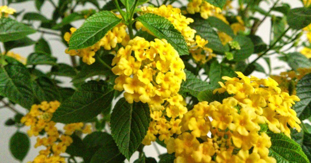 lựa chọn những bông hoa ngũ sắc đẹp nhất