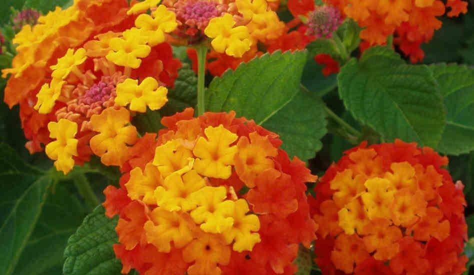 ấn tượng từ những bông hoa ngũ sắc đẹp nhất