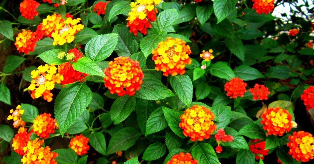 lựa chọn những bông hoa ngũ sắc đẹp và ấn tượng