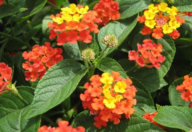 những bông hoa ngũ sắc trong khu vườn