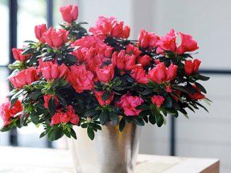 hoa do quyen 2