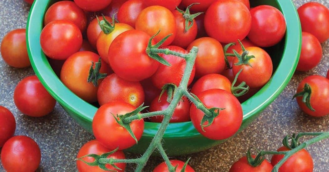 thưởng thức cà chua cherry