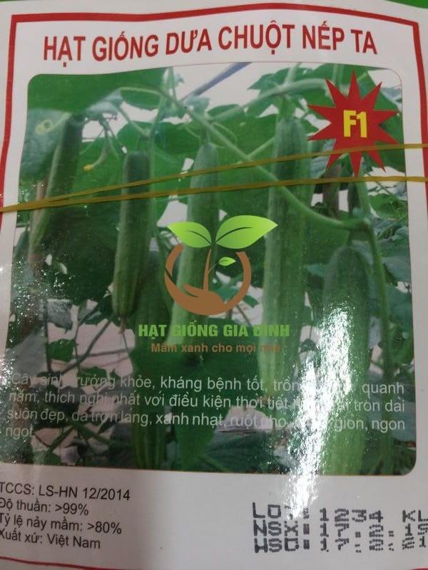 Thời vụ trồng dưa chuột vào tháng nào cho năng xuất