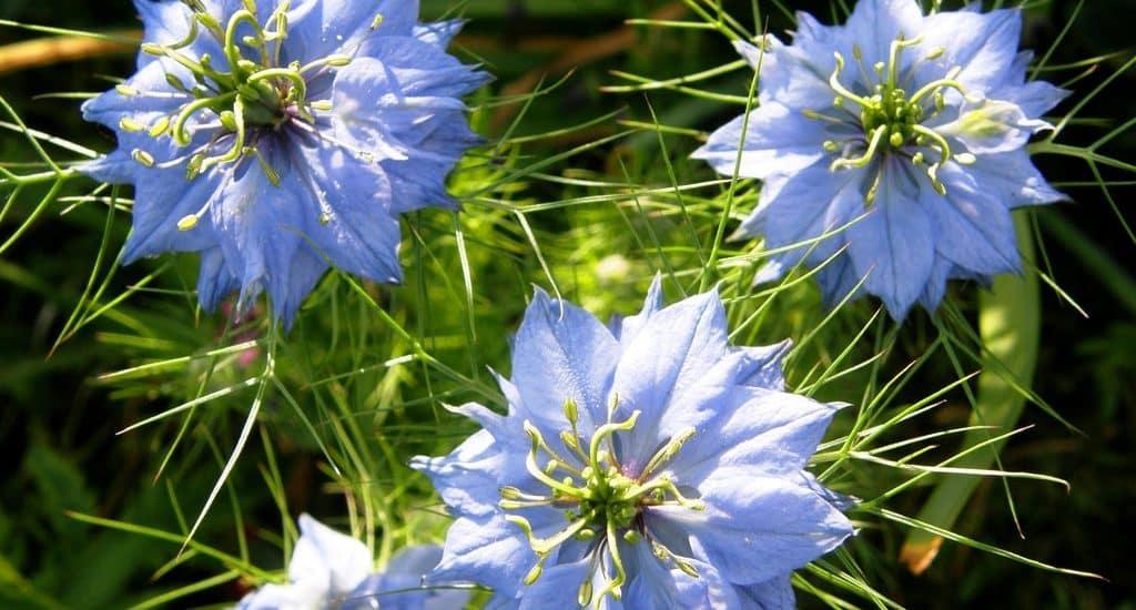 những bông hoa bảo thạch ba tư cực kỳ đẹp