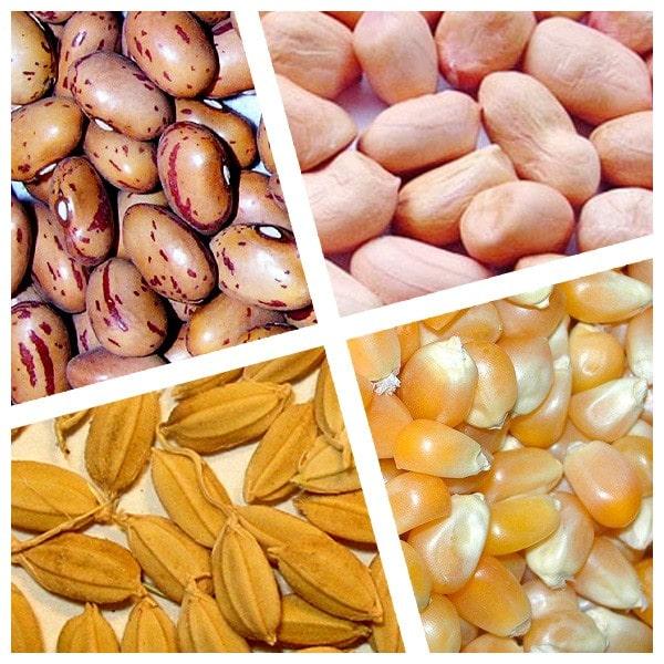 Hướng dẩn cách bảo quản hạt giống quanh năm