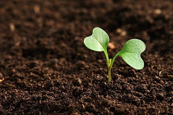 Vì sao hạt giống không nảy mầm và những nguyên nhân