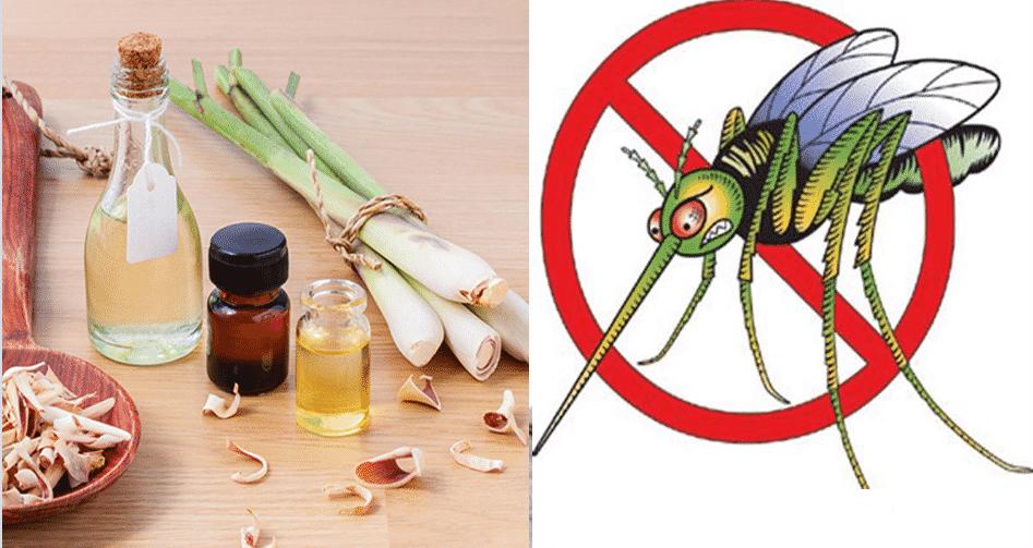 Cách sử dụng tinh dầu đuổi muỗi