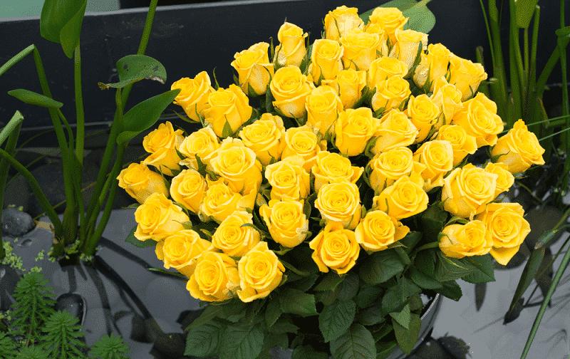 Hoa hồng vàng tặng thầy cô giáo