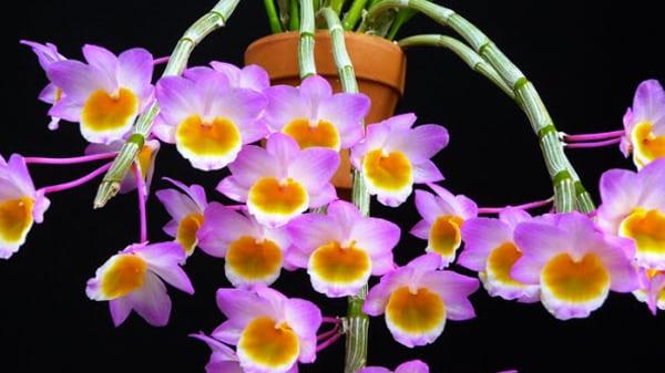 những bôn hoa tuyệt đẹp của long tu đá